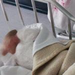 neonata-